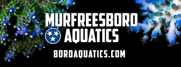 Murfreesboro Aquatics